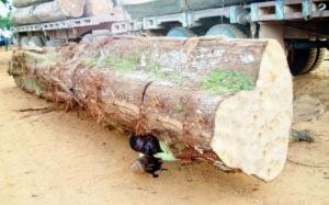 worker-dies-crushed-huge-log-brazil-01-500x312